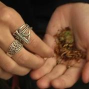 Les fumeurs de cannabis pourront désormais échapper au tribunal