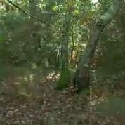 Déclaré mort depuis 5 ans, un médecin vivait dans une forêt