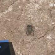 Irak: l'armée kurde en proie à une invasion d'insectes