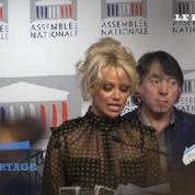 Cohue et polémiques pour la venue de Pamela Anderson à l'Assemblée