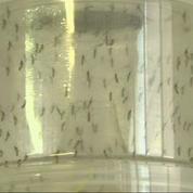 Le Brésil impuissant face au virus Zika