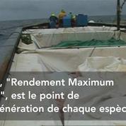 Surpêche en Méditerranée : l'alerte de Bruxelles