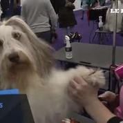 A New York, l'un des plus importants concours canin a commencé