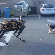Un chien désemparé devant le nouveau robot de Boston Dynamics