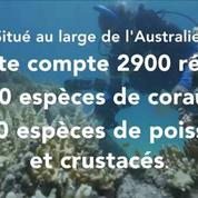 La Grande barrière de corail se meurt plus vite que prévu
