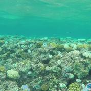 Australie : la Grande Barrière de corail a perdu ses couleurs