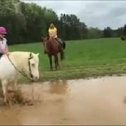 Un poney blanc s'amuse dans l'eau