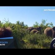 Des éléphants s'en prennent à un groupe de touristes