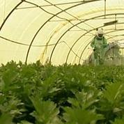 La Commission Européenne va décider du sort du glyphosate, un pesticide potentiellement cancérigène