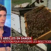 Plus de 600.000 signatures contre les pesticides qui tuent les abeilles