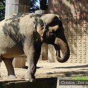 Cet éléphant a trouvé une drôle de façon de s'abreuver