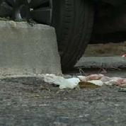 Marseille : Deux hommes tués par balles, une fille de 14 ans grièvement blessée