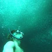 Entrez dans ce vortex de sardines hypnotisant