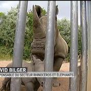 Le zoo d'Amnéville accueille un petit rhinocéros blanc