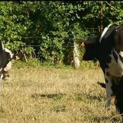 Prix du lait : bras de fer entre Lactalis et les producteurs