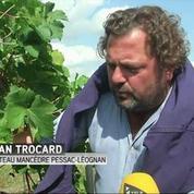 Gironde: le rendement des vignes du Bordelais pourrait baisser de 15% à cause de la canicule