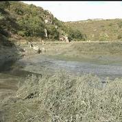 Bretagne: nouvelle suspicion autour des algues vertes mortelles