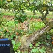 Sur la route des pommes en Normandie
