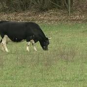 Salon de l'agriculture 2017 : Fine, la vache égérie de cette édition