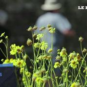 Le désert californien en fleurs après les fortes pluies de l'hiver