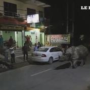 Un rhinocéros dans la ville