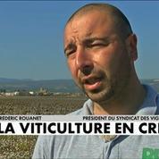 La viticulture en crise