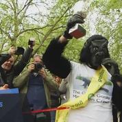Déguisé en gorille, un marathonien parcourt 42 km à quatre pattes