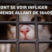 Taïwan devient le premier pays d'Asie à interdire la consommation de chiens et de chats
