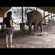 Les éléphants ont bien conscience de leur corps