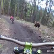 Quand un ours poursuit un cycliste