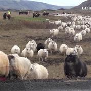 L'aventure islandaise