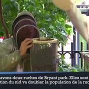 New York : un nid géant de 30 000 abeilles déplacé en plein Times Square