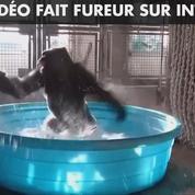 La danse d'un gorille dans une piscine