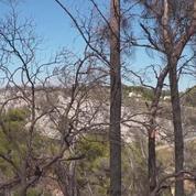 Les risques de feux de forêts accrus par le réchauffement climatique