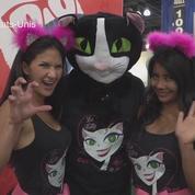 Vingt mille amoureux des chats au CatCon 2017 à Pasadena