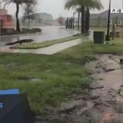 Des alligators dans les rues de Miami après le passage d'Irma