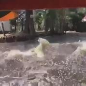 Séisme au Mexique : des touristes sur un bateau filment la secousse