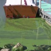 La prolifération d'algues toxiques abîme la nature américaine