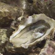 Citron, gingembre, muscat : la tendance des huîtres parfumées pour Noël