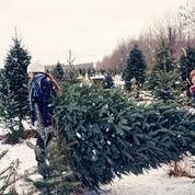 Que faire de son sapin de Noël après les fêtes ?