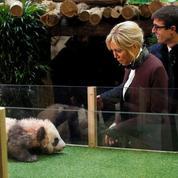 Le bébé panda du zoo de Beauval baptisé Yuan Meng en présence de Brigitte Macron