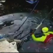 Une baleine secourue dans le port de Cassis