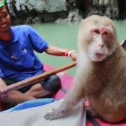 Thaïlande : un singe s'invite à l'improviste sur le kayak de touristes