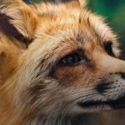 Biodiversité : ces animaux qui vivent à Paris dont vous ne soupçonniez pas l'existence