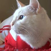 Voici Achilles, le chat-devin de la coupe du monde de football