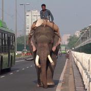 Inde : les éléphants menacés d'expulsion à New Delhi