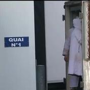 Abattoir de Mauléon : le procès de la maltraitance animale