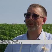 Les vendanges enchantent les viticulteurs