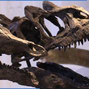 Deux squelettes de dinosaures mis aux enchères à Paris