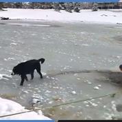 Bri, le chien sauvé d'un lac gelé